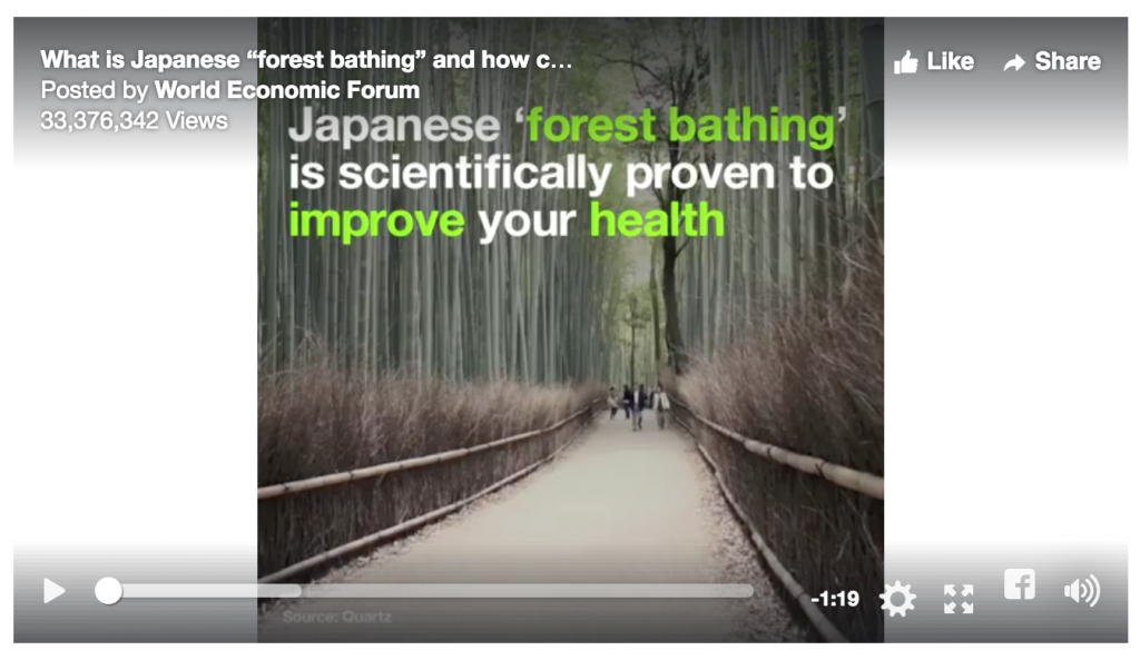 Heart Energy - Forest Bathing Japenese for Better Health